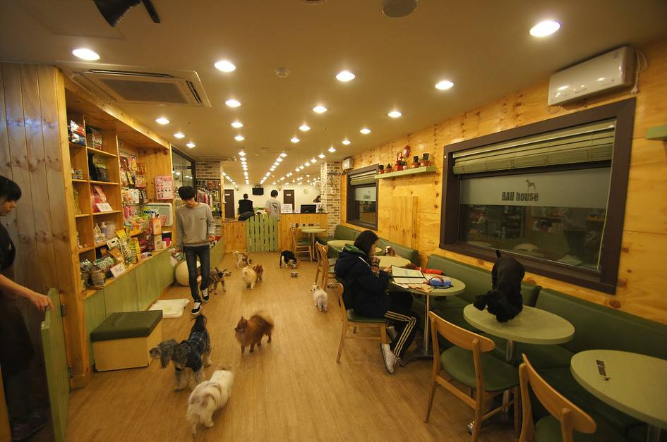 Themed Cafes in Seoul bua dog cafe