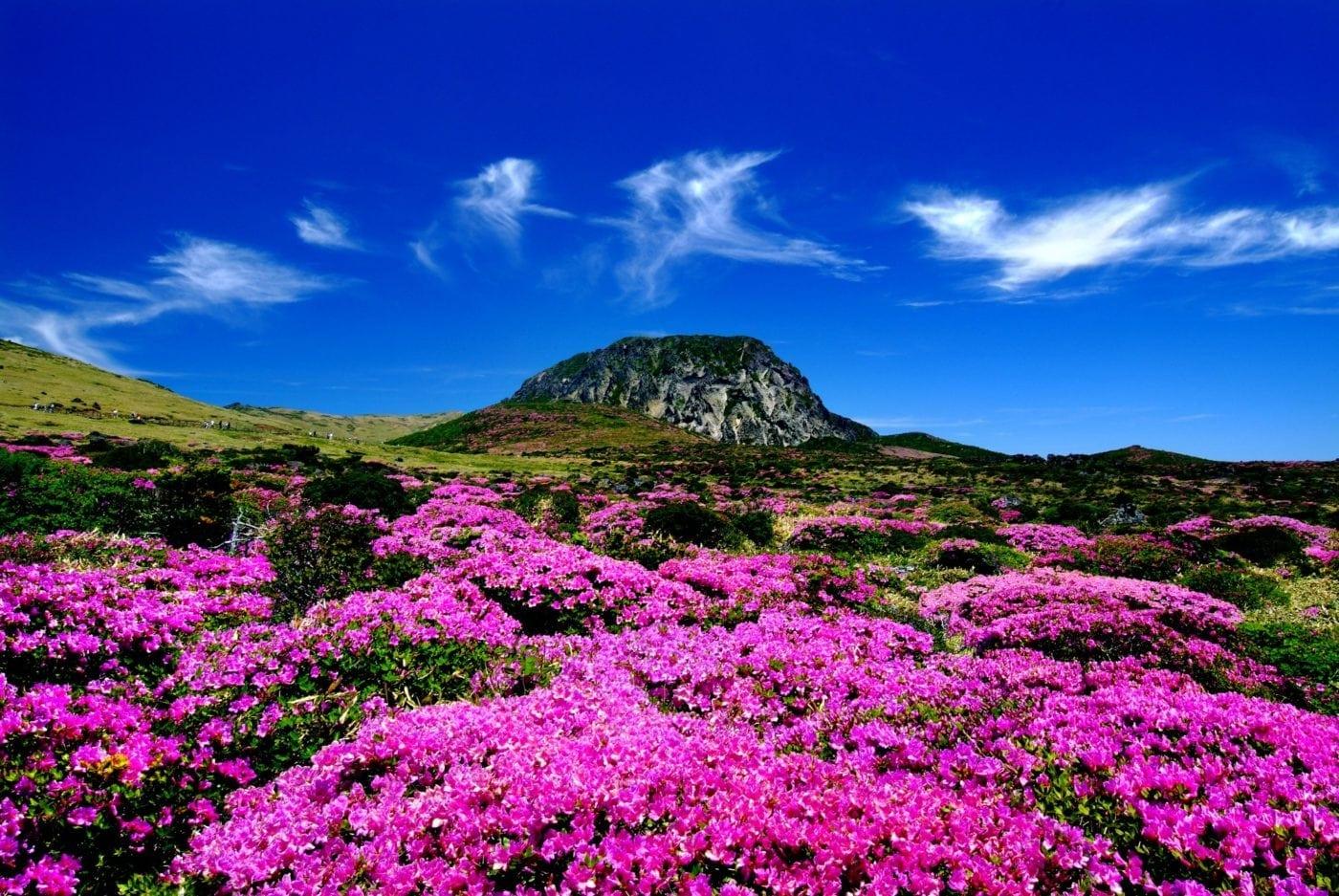 https://www.10mag.com/directory/entertainment/listing/hallasan-mountain-cheju-jeju-do