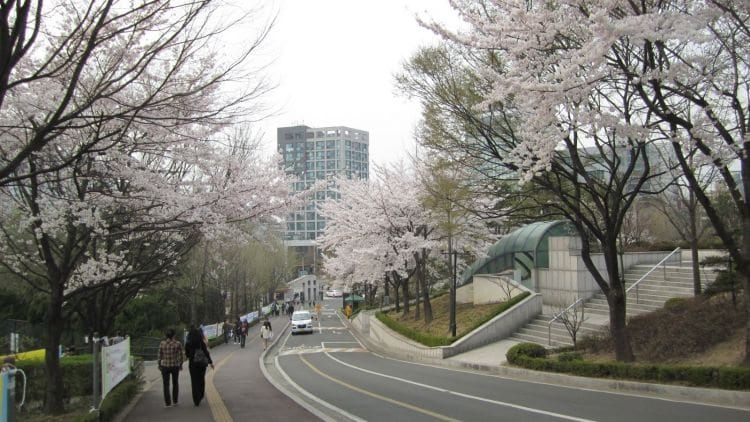 university exchange programs in seoul sogang university