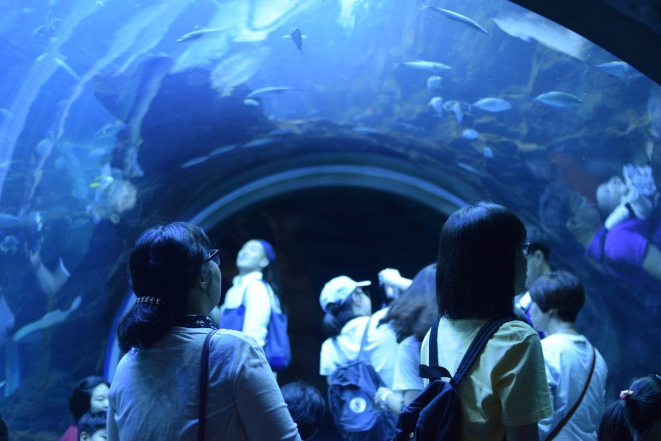 Aqua Planet Ilsan - aquariums in korea
